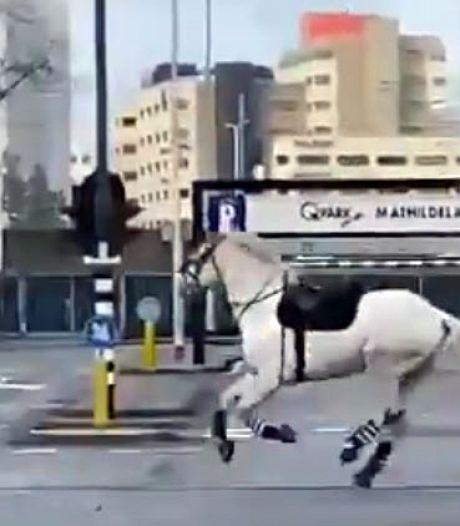 Benweno (56) schiet politie te hulp bij vangen van paard in Eindhoven: 'Heel heftig voor het dier'
