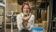 Chip spoort binnen kwartier kanker op: Belgische uitvinding over enkele jaren te koop