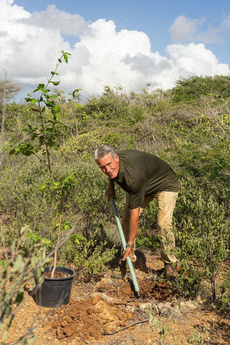 Het is hard werken om in de droge, harde grond een gat te graven voor een nieuwe boom. Beeld Stephan Kogelman