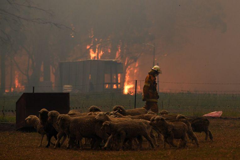 Huizen werden beschermd door de brandweer tijdens de branden in Australië eind vorig jaar.  Beeld REUTERS