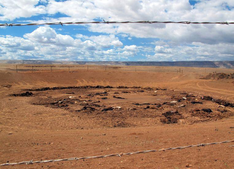 Karkassen in de uitgedroogde waterput, nu afgesloten met prikkeldraad. Volgens de leiders van het indianenvolk de Navajo, zijn de paarden op hun land het slachtoffer van overpopulatie en slinkende watervoorraden.