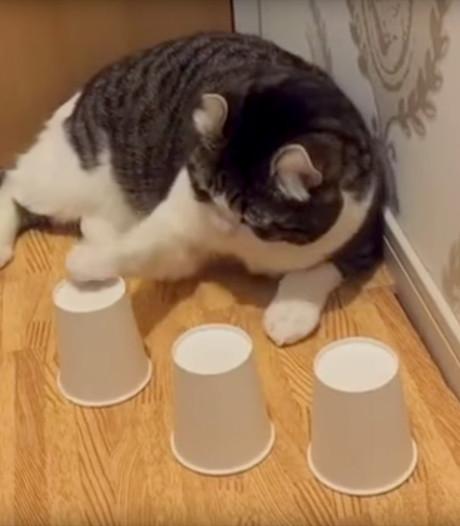 Kat met uitzonderlijk balgevoel is een hit op internet