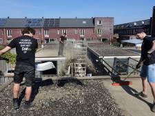 Horeca-personeel kan in Breda het (groene) dak op