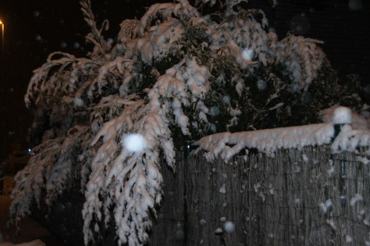 Bomen, struiken en planten hangen naar beneden door het gewicht van de sneeuw.