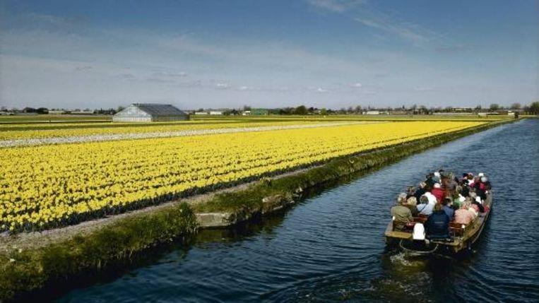 Toeristen varen door de bollenvelden bij Lisse. De Nederlandse bloemensector is goed voor 13 procent van de wereldproductie. (FOTO MAARTJE GEELS) Beeld