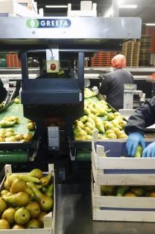 Corona aangetroffen bij 23 van de 202 medewerkers van Fruitmasters Geldermalsen