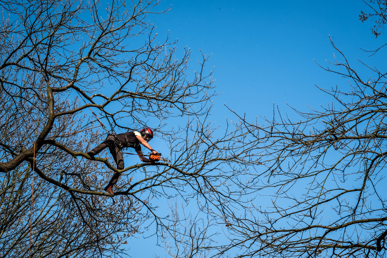 Nick van Rooien is al negen jaar actief als boomverzorger.