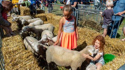 Geen veeprijskamp of Pulderbos-kermis dit jaar: gemeente gelast alle evenementen tot eind augustus af