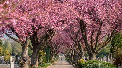 Hogeschool Vives campus Roeselare onderzoekt inzet van drones om bomen te redden