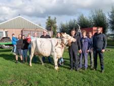 Ruim duizend boeren uit Oost-Nederland naar Den Haag voor protestactie: 'Er moet wat gebeuren'