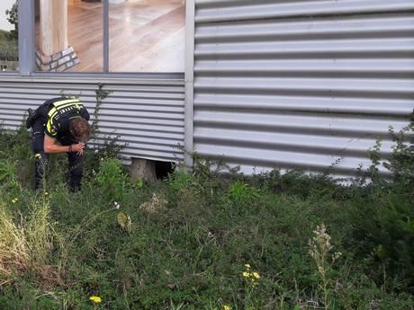 Kelder woonwinkel Helmond vol met wietplanten