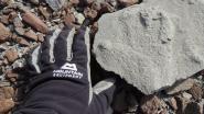 200 miljoen jaar oude voetafdruk van dinosaurus gevonden op Antarctica