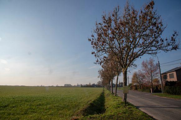 De bomenrij in de Scheldeweg veroorzaakt schade aan het drainagesysteem van de landbouwgrond ernaast. De gemeente wil ze kappen.