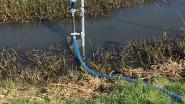 Zonnepomp helpt bedreigde weidevogels in de Kalkense Meersen en is een primeur voor Oost-Vlaanderen