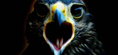 'Vogel verdwijnt van de Veluwe'