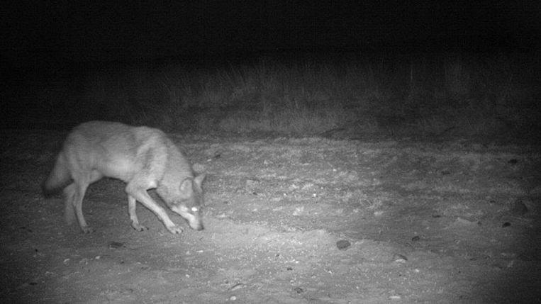 Deze foto van wolvin Naya werd in oktober genomen.