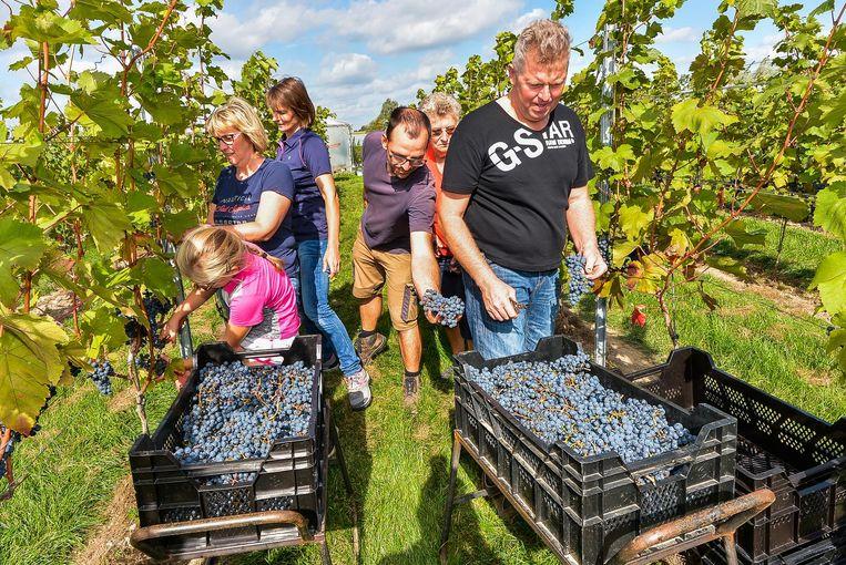 Dirk Talpe heeft al enkele jaren een wijngaard in het landelijke Kruiseke.