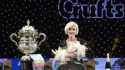 Hond uit Aalst verslaat 20.000 soortgenoten op grootste show ter wereld