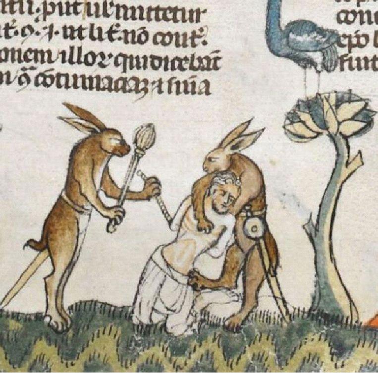 In de Middeleeuwen werd de haas gezien als een mythisch beest, dat allerlei rare dingen deed als je niet keek. Beeld RV