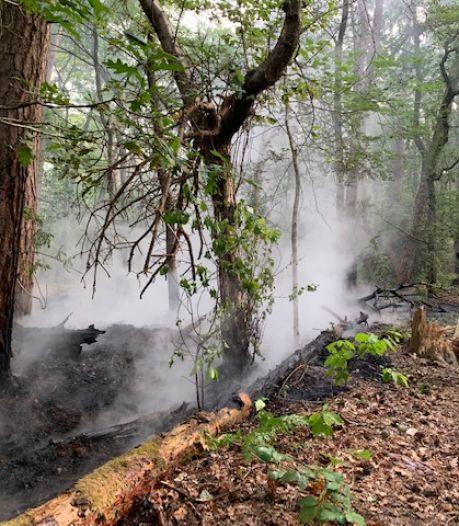 Bosbrand nabij tussen Vught en Helvoirt onder controle