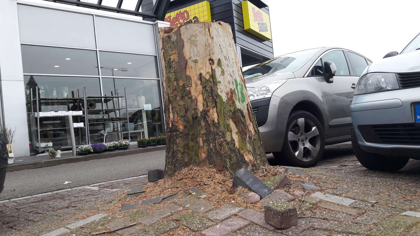 De ernstige wortelopdruk door de bomen op de parking bij de Nettorama in Bergen op Zoom hebben geleid tot pijnlijke struikelpartijen. Na de kap en verwijdering van de stronken, worden alle parkeervakken herbestraat.