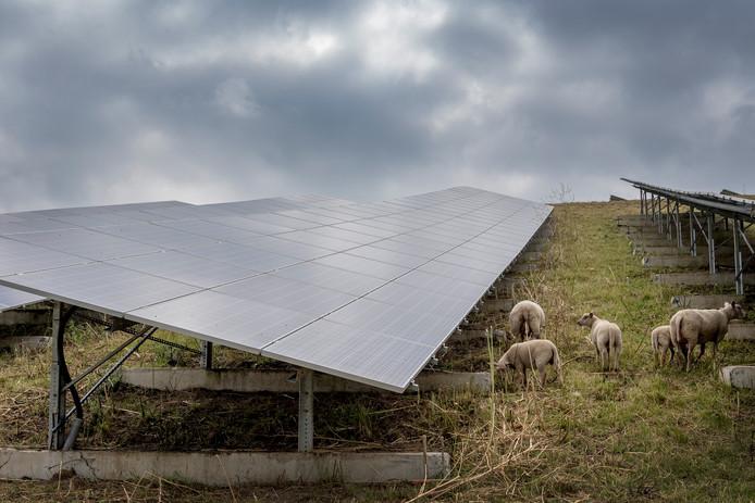 Schapen grazen tussen de zonnepanelen op het zonnepark AVRI