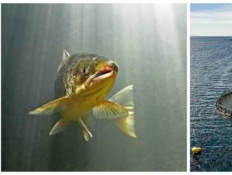 Weet wat je eet: met zalmkwekerij in Oostende worden problemen in Noorse 'fishfarms' ontweken
