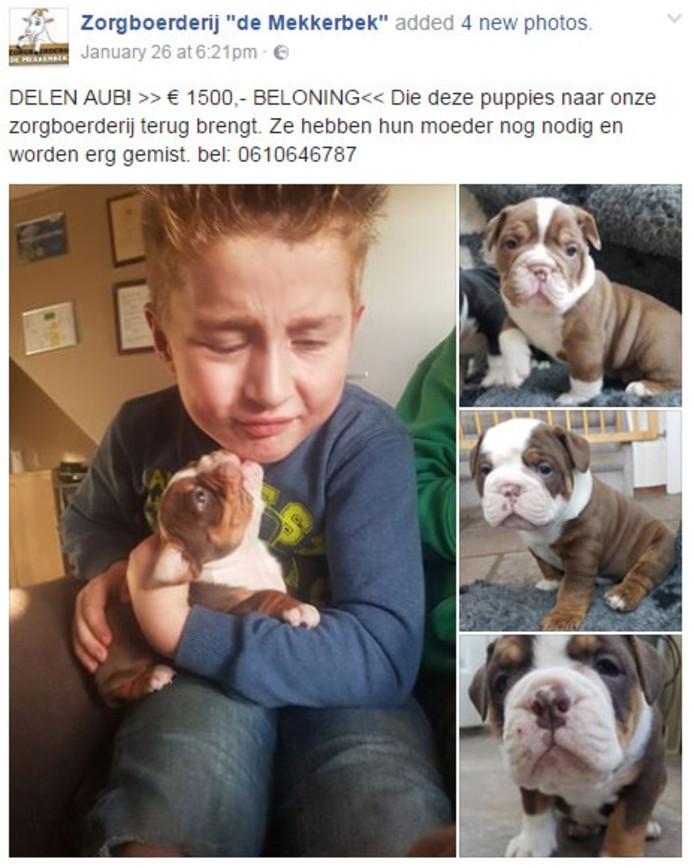 BAARLE-NASSAU/BREDA - Eén van de vier zeldzame puppy's die eind januari werden gestolen bij zorgboerderij De Mekkerbek in Baarle-Nassau, is teruggevonden.