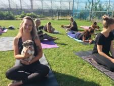 Acht schattige puppy's verrijken 'yoga met een knipoog'