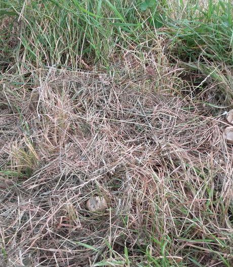 Omwonenden stroompje in Bronkhorst luiden noodklok na vondst kapotte vogelnesten: 'Waterschap, ga later maaien!'