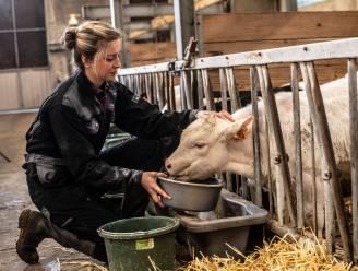 """Ines uit 'Boerenjaar' combineert het familiebedrijf met job als adviseur: """"Een etentje missen omdat een koe gaat kalven... Dat hoort erbij"""""""