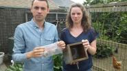 Velt en Vogelbescherming Vlaanderen tellen dode mezen: 916 dode mezenjongen gevonden in West-Vlaanderen
