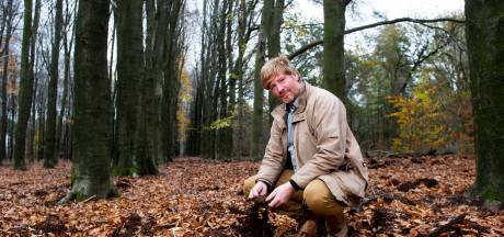 Te veel wilde zwijnen op de Veluwe door vele toeristen: 'Een vicieuze cirkel waar we maar niet uitkomen'