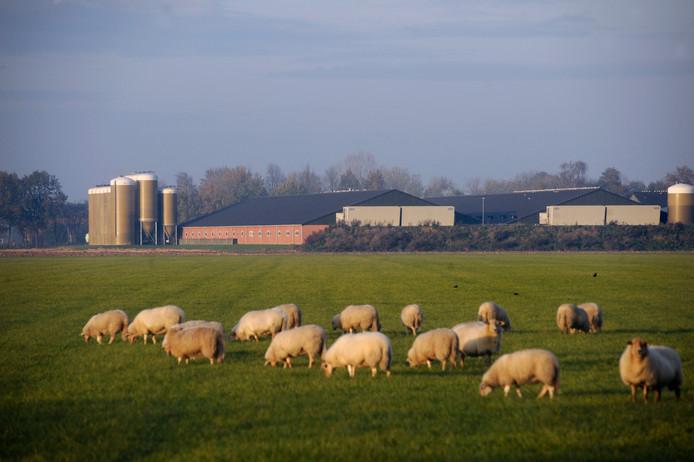Varkensstallen aan De Elzen in Boekel.