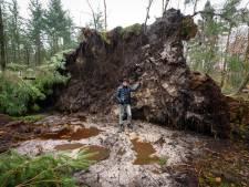 Landgoederen Hof van Twente hebben weinig schade van Ciara: 'Storm was niet van: o help'