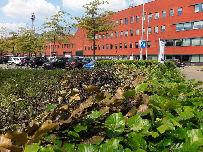 Vlakbij het stadion werd volgens ooggetuigen een heg in brand gestoken. Aan de linkerkant is een gedeelte zwart geblakerd.