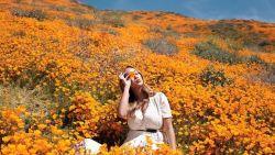 Amerikaans bloemenveld kan de drommen Instagrammers niet aan