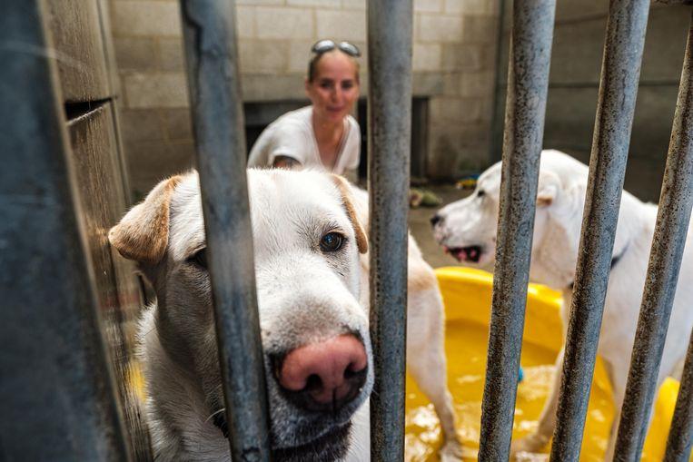 Het dierenasiel in Wommelgem is tevreden met de extra subsidie van 3.000 euro