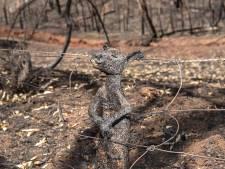 Foto zwartgeblakerd kangoeroejong schokt wereld: 'Dit is de bikkelharde realiteit'