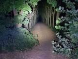 Doodsbenauwd en moederziel alleen door Roosendaler achtergelaten in donker Mastbos