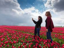 Tulpenroute Flevoland verwelkomt eerste bezoekers