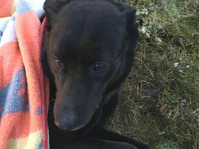 De hond die werd gevonden bij knooppunt De Hogt
