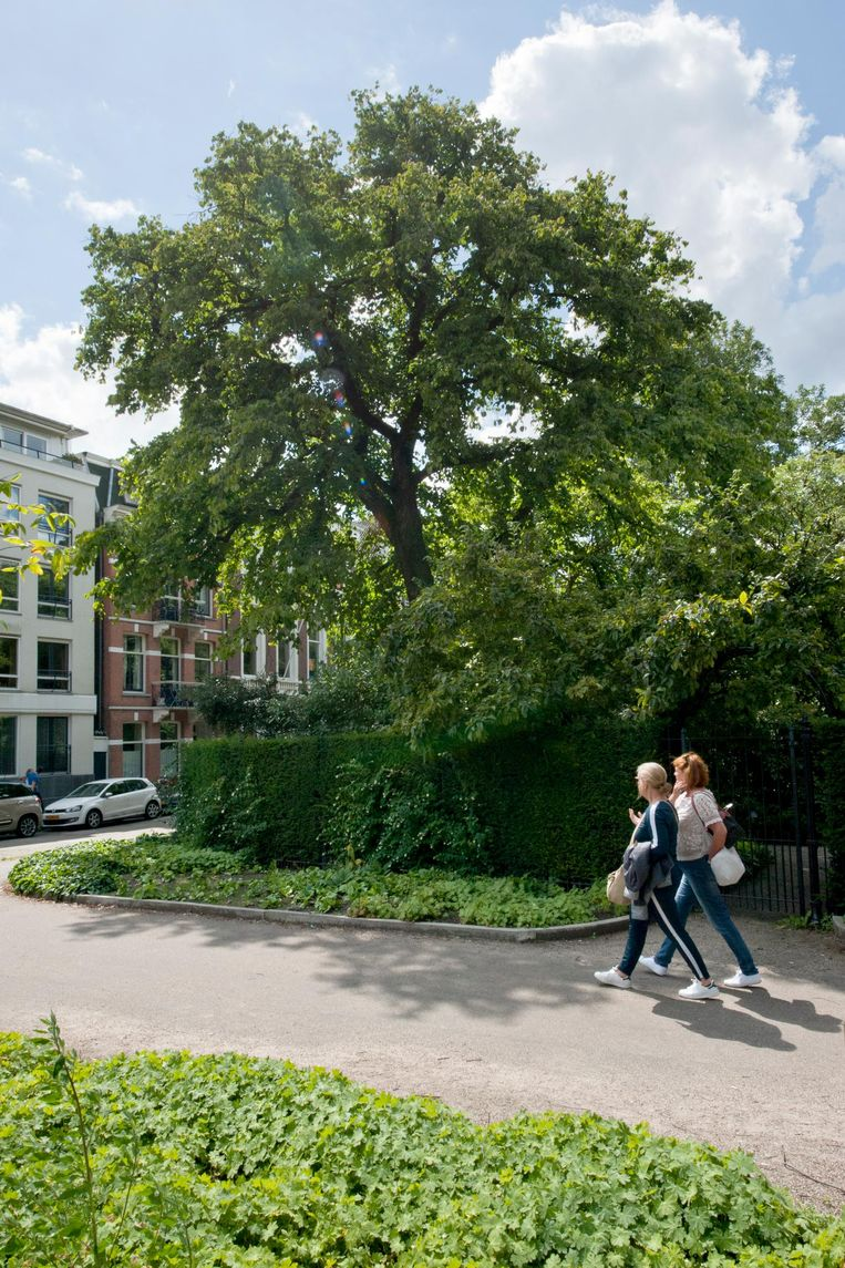 Bomen bij de Hortus Beeld Ko Hage