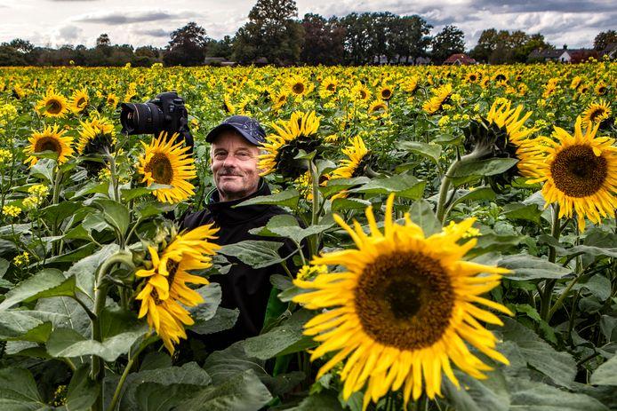 Zonnebloemen staan eindelijk in bloei. Gerrit Willems legt ze vast voor ouderen en oud-Holtenaren.