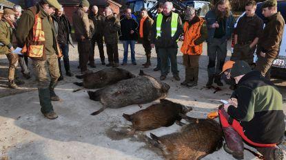 Eerste stille drukjacht op everzwijnen in Meerdaalwoud