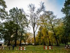 Een van de gevaarlijke populieren in Worpplantsoen mag toch blijven staan van gemeente Deventer