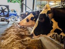 Nederlandse boeren de dupe van extreme droogte en hitte