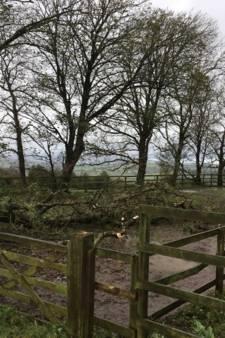 Hoogtepunt Ierse storm voorbij voor Veghelse Rianne: 'Waarschijnlijk wel drie tot tien dagen zonder stroom'