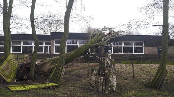 Bij basisschool De Kikkenduut in Oisterwijk is een populier op het schoolgebouw gewaaid. De lessen konden in andere lokalen doorgaan.