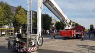 IN BEELD. Hoogstraten in Groenten & Bloemen en de zegening van de toren van de Sint-Katharinakerk